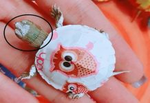 Rùa mini có hình dáng giống rùa tai đỏ