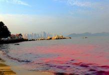 Hiện tượng thủy triều đỏ