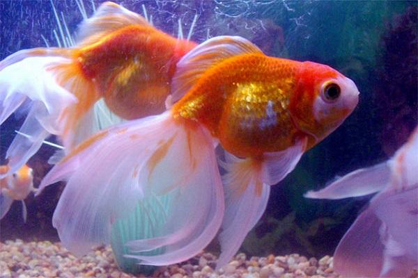 Tại sao bạn lại mơ thấy cá