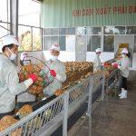ngành nông sản Việt Nam