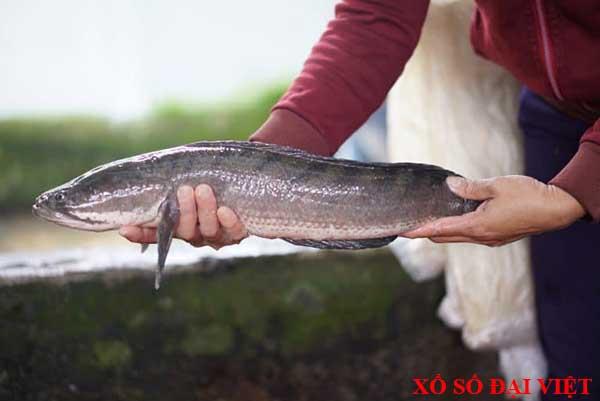 Giải mã giấc mơ thấy cá chuối đánh con gì