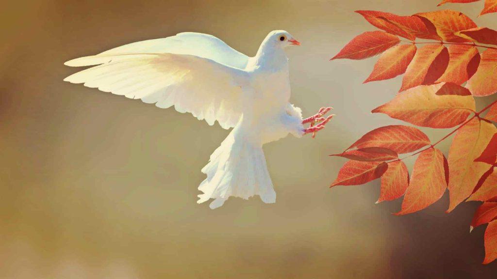 Chim bồ câu trắng bay vào nhà là điềm gì? Đánh con gì dễ trúng